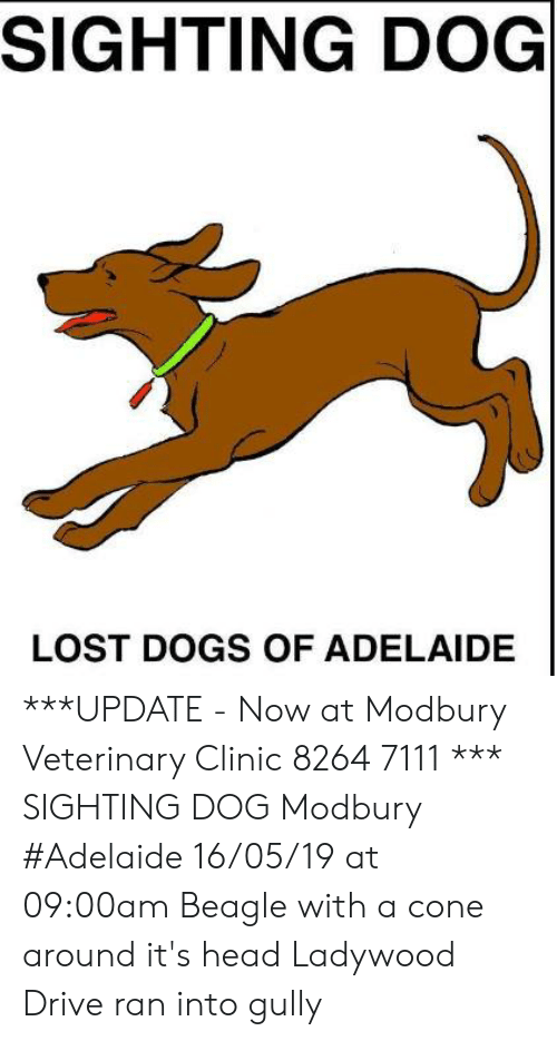 Dogs, Head, and Memes: SIGHTING DOG  LOST DOGS OF ADELAIDE ***UPDATE  - Now at Modbury Veterinary Clinic  8264 7111 ***  SIGHTING DOG Modbury #Adelaide 16/05/19 at 09:00am Beagle with a cone around it's head Ladywood Drive  ran into gully