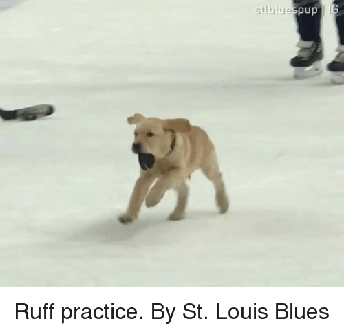Dank, St Louis, and Pup: silblue  pup Ruff practice.  By St. Louis Blues