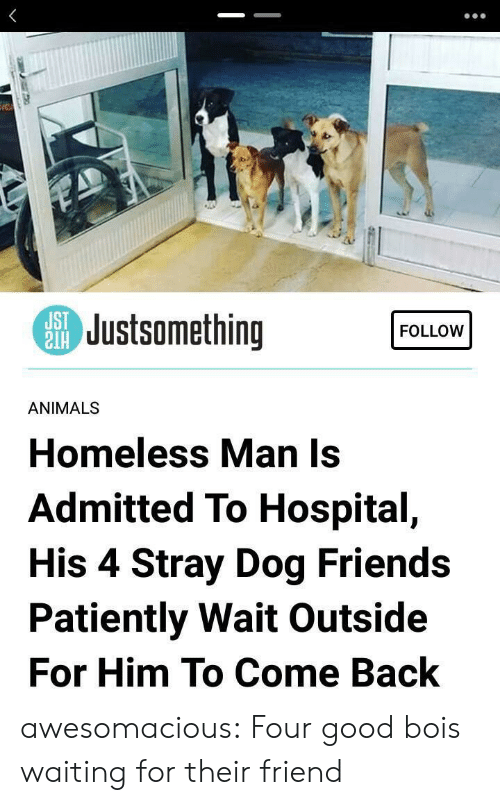 Animals, Friends, and Homeless: SJustsomething  FOLLOW  ANIMALS  Homeless Man Is  Admitted To Hospital,  His 4 Stray Dog Friends  Patiently Wait Outside  For Him To Come Back awesomacious:  Four good bois waiting for their friend