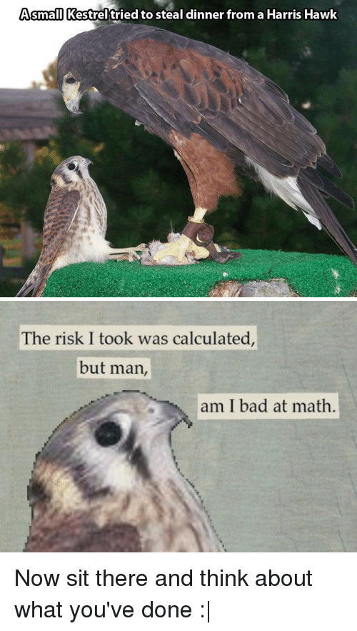 Risk I Took Was Calculated But Man Am I Bad At Math