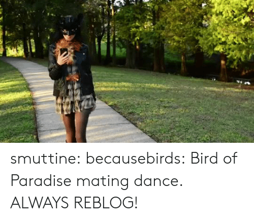 Paradise: smuttine: becausebirds: Bird of Paradise mating dance. ALWAYS REBLOG!