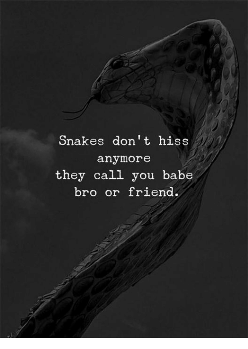 Snakes, Friend, and They: Snakes don't hiss  anymore  they call you babe  bro or friend.