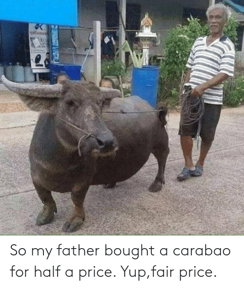 father: So my father bought a carabao for half a price. Yup,fair price.
