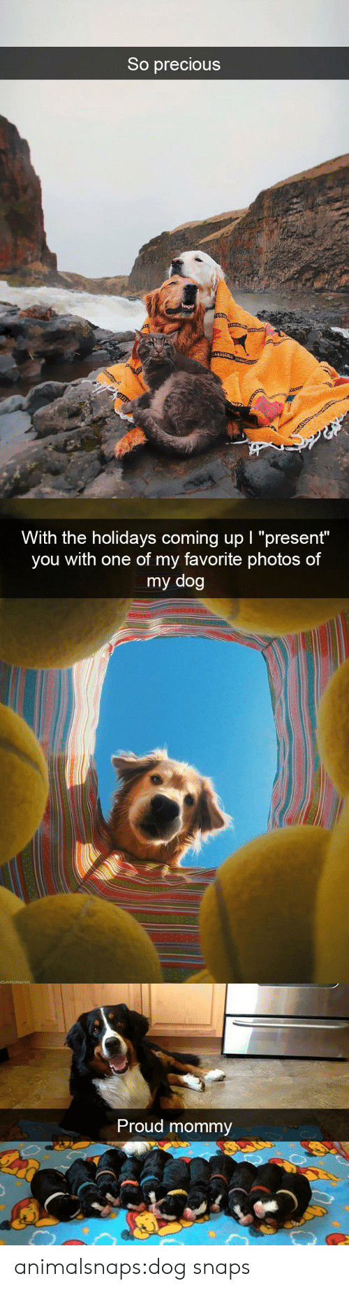 """Precious, Target, and Tumblr: So precious   With the holidays coming up I """"present""""  you with one of my favorite photos of  my dog   Proud mommy animalsnaps:dog snaps"""