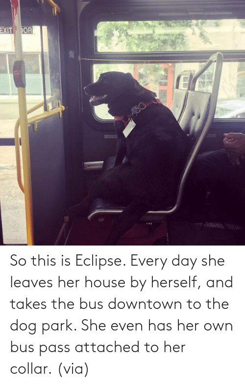 House: So this is Eclipse. Every day she leaves her house by herself, and takes the bus downtown to the dog park. She even has her own bus pass attached to her collar.(via)