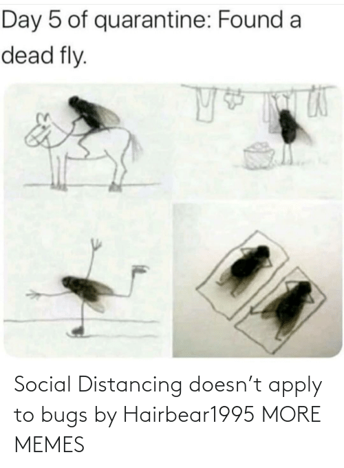 Apply: Social Distancing doesn't apply to bugs by Hairbear1995 MORE MEMES
