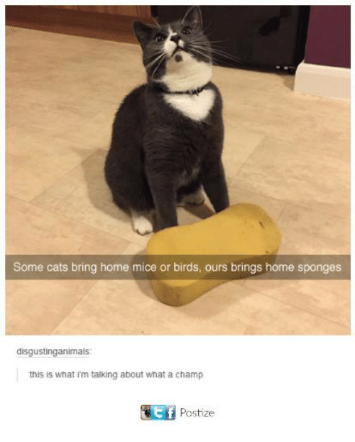 sponges: Some cats bring home mice or birds, ours brings home sponges  disgustinganimals  this is what i'm talking about what a champ  Postize