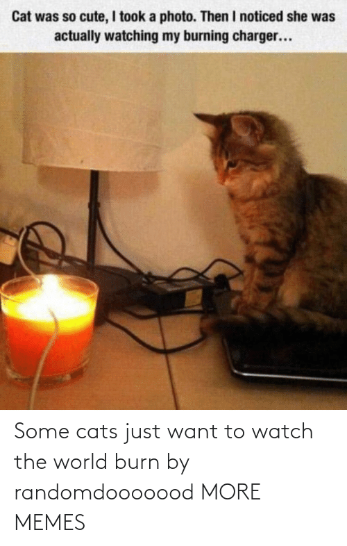 just: Some cats just want to watch the world burn by randomdooooood MORE MEMES