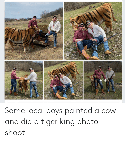 And: Some local boys painted a cow and did a tiger king photo shoot