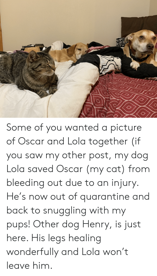 Saw, A Picture, and Back: Some of you wanted a picture of Oscar and Lola together (if you saw my other post, my dog Lola saved Oscar (my cat) from bleeding out due to an injury. He's now out of quarantine and back to snuggling with my pups! Other dog Henry, is just here. His legs healing wonderfully and Lola won't leave him.
