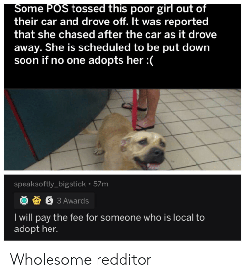 Wholesome: Some POS tossed this poor girl out of  their car and drove off. It was reported  that she chased after the car as it drove  away. She is scheduled to be put down  soon if no one adopts her :  speaksoftly_bigstick 57m  S3 Awards  I will pay the fee for someone who is local to  adopt her. Wholesome redditor