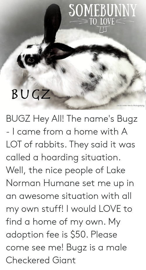 Love, Memes, and Giant: SOMEBUNNY  TO LOVE  BUGZ  parla Adair Davis Photography BUGZ  Hey All! The name's Bugz - I came from a home with A LOT of rabbits.  They said it was called a hoarding situation. Well, the nice people of Lake Norman Humane set me up in an awesome situation with all my own stuff! I would LOVE to find a home of my own.  My adoption fee is $50.  Please come see me!  Bugz is a male Checkered Giant