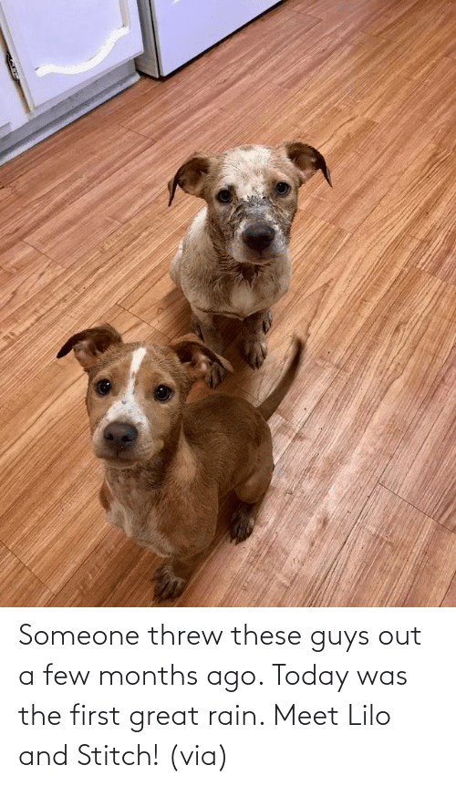 The First: Someone threw these guys out a few months ago. Today was the first great rain. Meet Lilo and Stitch! (via)