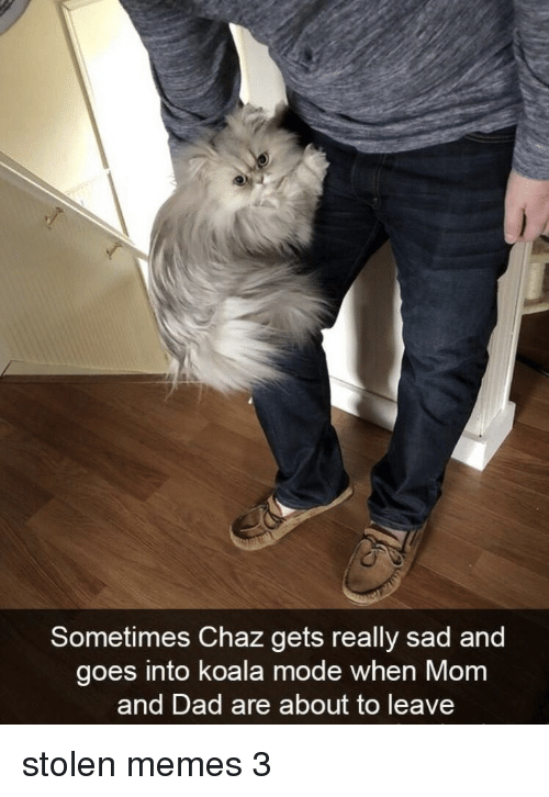 Chaz: Sometimes Chaz gets really sad and  goes into koala mode when Mom  and Dad are about to leave stolen memes 3