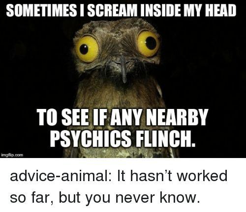 Advice, Head, and Scream: SOMETIMES I SCREAM INSIDE MY HEAD  TO SEE IF ANY NEARBY  PSYCHICS FLINCH.  imgflip.com advice-animal:  It hasn't worked so far, but you never know.