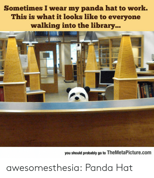 Tumblr, Work, and Panda: Sometimes I wear my panda hat to work.  This is what it looks like to everyone  walking into the library...  you should probably go to TheMetaPicture.com awesomesthesia:  Panda Hat
