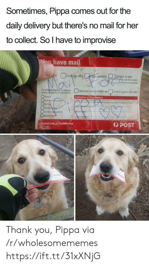 Shooters, Thank You, and Australia: Sometimes, Pippa comes out for the  daily delivery but there's no mail for her  to collect. So I have to improvise  have mail  Smal parcels)  s)  targe parcel(s)  Charges to pay  Pay over the counter  during business hous  Mai  For ePalcel identity on delivery  (please tidk specific ID requirement)  Only addressee can collect or  Another person can collect  Passport  Collection Authorisation  Australian Drers Licence  Key Pa  Shooters cpce  fetidere persongsgnore of the addressee a NOT requred and youwah someone  eartoe  wmy ogent to collect the above articlels  Australian Lepers Pemit  Any of the above  AUSTRALIA  POST  auspost.com.au/mydeliveries Thank you, Pippa via /r/wholesomememes https://ift.tt/31xXNjG