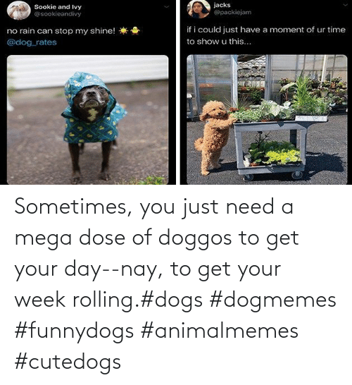 rolling: Sometimes, you just need a mega dose of doggos to get your day--nay, to get your week rolling.#dogs #dogmemes #funnydogs #animalmemes #cutedogs