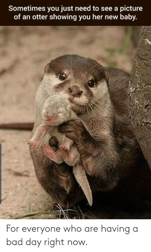 Having A Bad Day: Sometimes you just need to see a picture  of an otter showing you her new baby. For everyone who are having a bad day right now.
