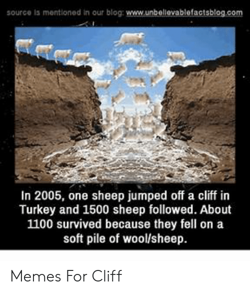Jumping Off A Cliff Meme: source is mentioned in our blog: www.unbellevablefactsblog.com  In 2005, one sheep jumped off a cliff in  Turkey and 1500 sheep followed. About  1100 survived because they fell on a  soft pile of wool/sheep Memes For Cliff