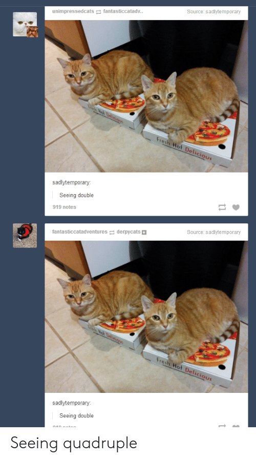 Fresh, Tumblr, and Source: Source:sadlytemporary  unimpressedcats fantasticcatadv..  Wb Deicioas  Fresh Hot Delicious  sadlytemporary:  Seeing double  919 notes  Source:sadlytemporary  fantasticcatadventures derpycats  Wah Delivius  Fresh Hot Delicious  sadlytemporary:  Seeing double Seeing quadruple