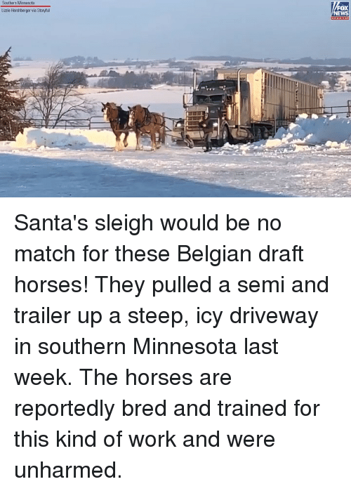 Horses, Memes, and Work: Southern Minnesota  OX  EWS  Lizzie Hershberger via Storyful Santa's sleigh would be no match for these Belgian draft horses! They pulled a semi and trailer up a steep, icy driveway in southern Minnesota last week. The horses are reportedly bred and trained for this kind of work and were unharmed.