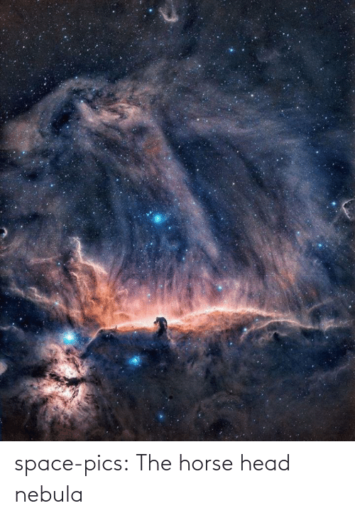 Horse: space-pics:  The horse head nebula