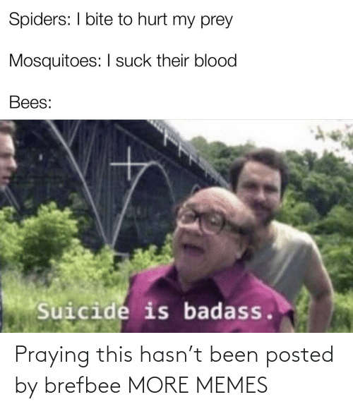 Bees: Spiders: I bite to hurt my prey  Mosquitoes: I suck their blood  Bees:  Suicide is badass. Praying this hasn't been posted by brefbee MORE MEMES