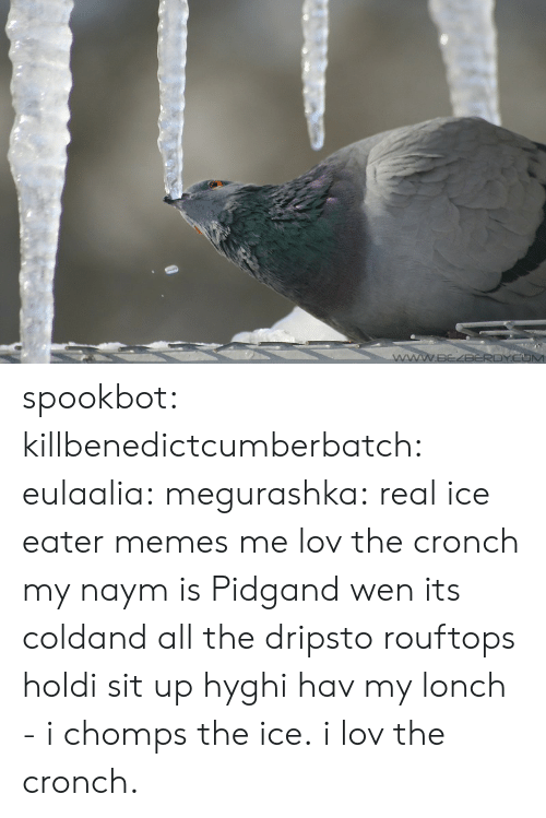Drips: spookbot:  killbenedictcumberbatch:  eulaalia:  megurashka: real ice eater memes me  lov the cronch  my naym is Pidgand wen its coldand all the dripsto rouftops holdi sit up hyghi hav my lonch - i chomps the ice. i lov the cronch.