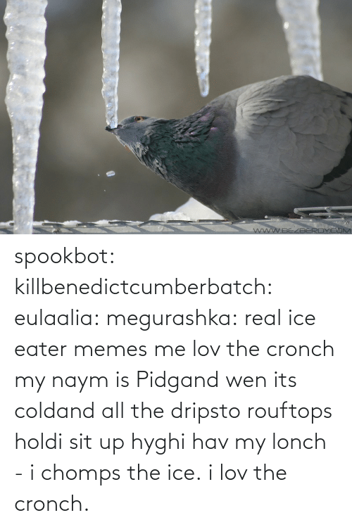 Cold: spookbot: killbenedictcumberbatch:  eulaalia:  megurashka: real ice eater memes me  lov the cronch  my naym is Pidgand wen its coldand all the dripsto rouftops holdi sit up hyghi hav my lonch - i chomps the ice. i lov the cronch.