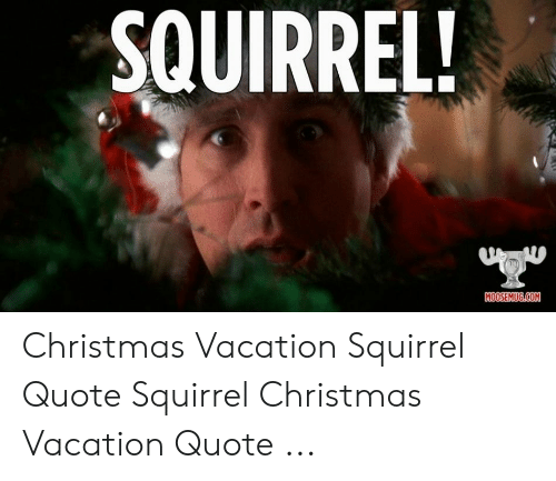 Christmas Vacation Meme.Squirrel Moosemugcom Christmas Vacation Squirrel Quote