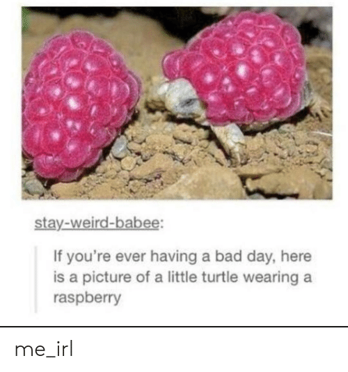 Having A Bad Day: stay-weird-babee:  If you're ever having a bad day, here  is a picture of a little turtle wearing  raspberry me_irl