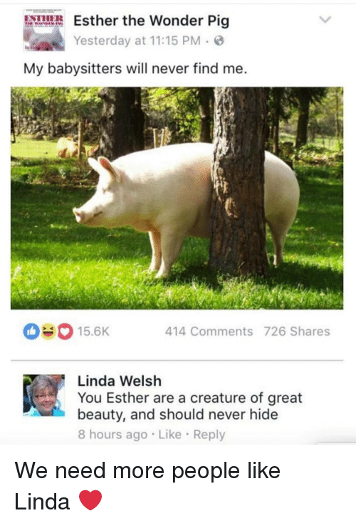 Memes, Never, and Wonder: sther the Wonder Pig  Yesterday at 11:15 PM  My babysitters will never find me  15.6K  414 Comments 726 Shares  Linda Welsh  You Esther are a creature of great  beauty, and should never hide  8 hours ago Like Reply We need more people like Linda ❤