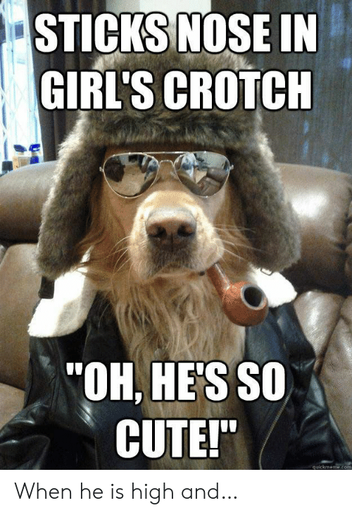 """quickmeme: STICKS NOSE IN  GIRL'S CROTCH  """"OH, HE'S SO  CUTE!""""  quickmeme.com When he is high and…"""