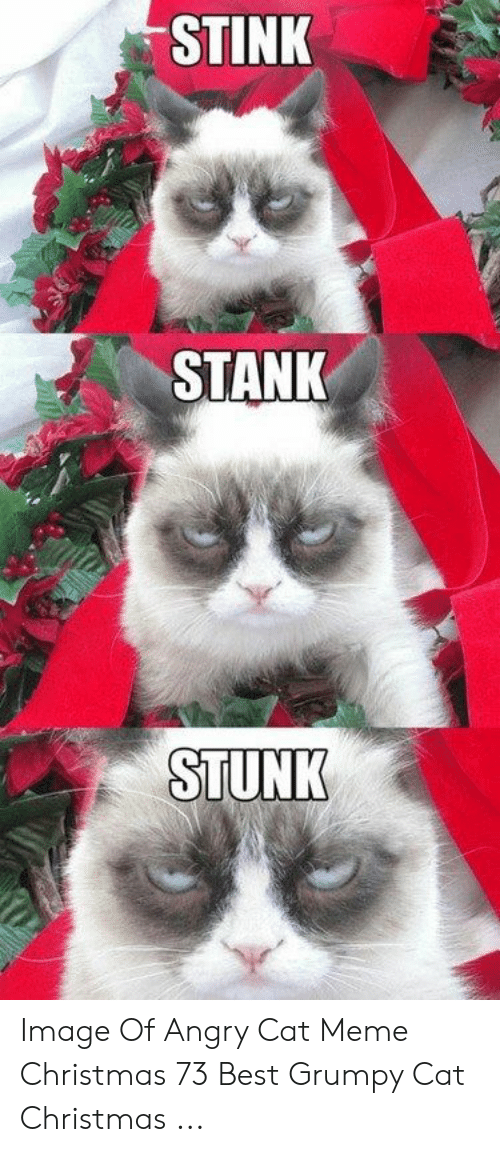 25 Best Memes About Angry Cat Meme Christmas Angry Cat Meme Christmas Memes