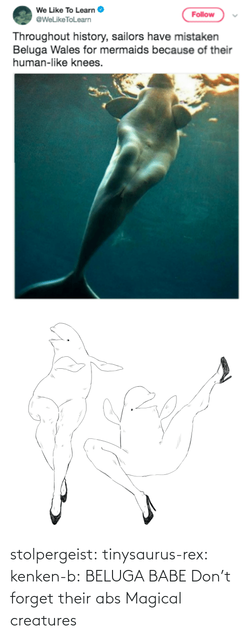 png: stolpergeist: tinysaurus-rex:  kenken-b: BELUGA BABE Don't forget their abs  Magical creatures