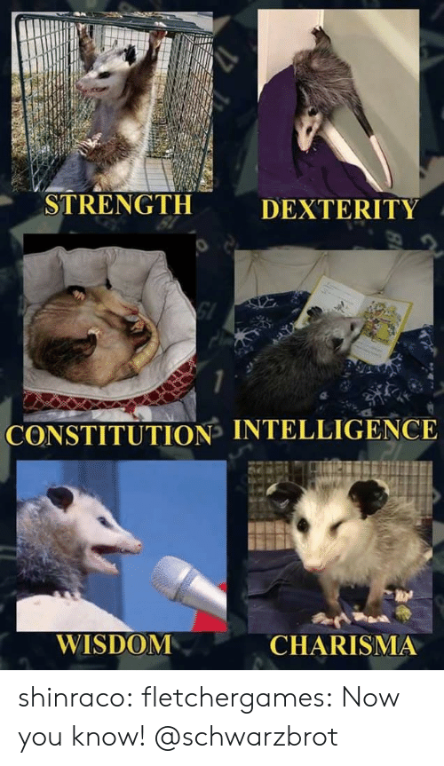 Tumblr, Blog, and Constitution: STRENGTH  DEXTERITY  SI  CONSTITUTION INTELLIGENCE  WISDOM  CHARISMA shinraco: fletchergames: Now you know! @schwarzbrot
