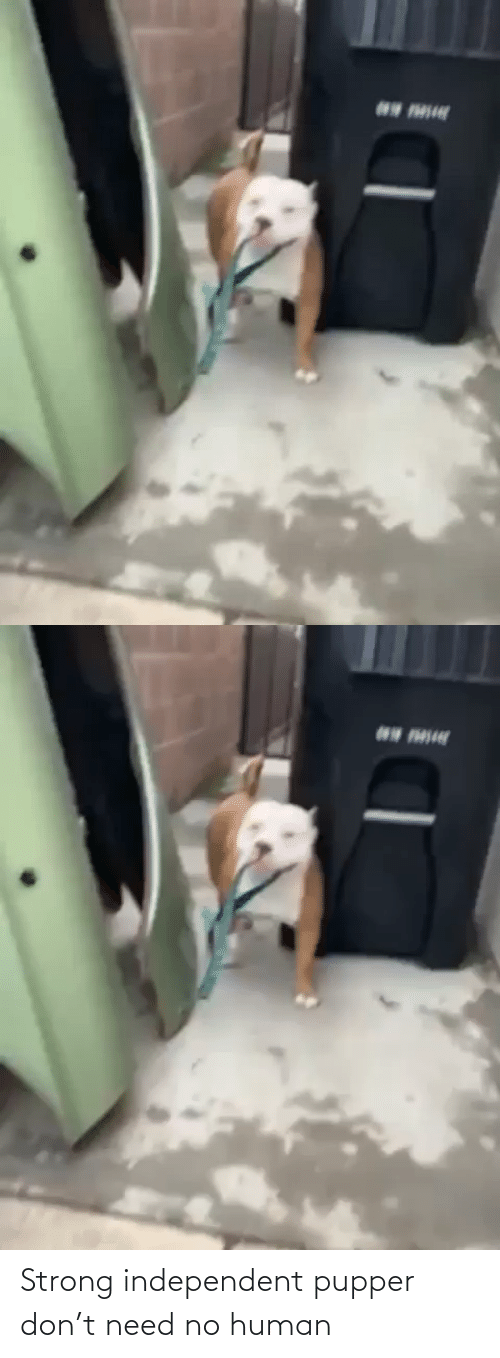 Independent: Strong independent pupper don't need no human