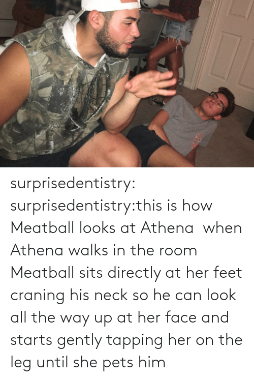 Sits: surprisedentistry:  surprisedentistry:this is how Meatball looks at Athena  when Athena walks in the room Meatball sits directly at her feet craning his neck so he can look all the way up at her face and starts gently tapping her on the leg until she pets him