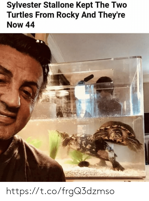 Rocky: Sylvester Stallone Kept The Two  Turtles From Rocky And They're  Now 44 https://t.co/frgQ3dzmso