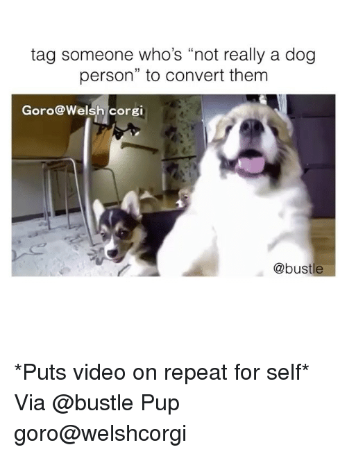 """Convertable: tag someone who's """"not really a dog  person"""" to convert them  Goro@Welsh corgi  @bustle *Puts video on repeat for self* Via @bustle Pup goro@welshcorgi"""