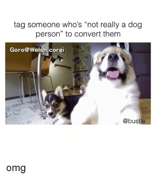 """Convertable: tag someone who's """"not really a dog  person"""" to convert them  Goro@Welsh corgi  @bustle omg"""