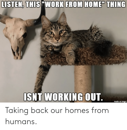 Back: Taking back our homes from humans.