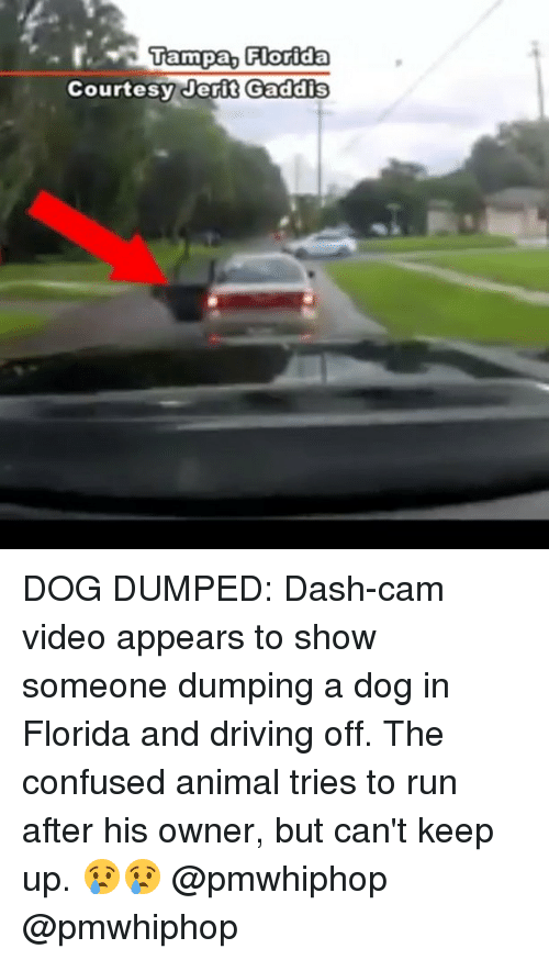 Camming: Tampa, Florida  Courtesy er i t Gaddis DOG DUMPED: Dash-cam video appears to show someone dumping a dog in Florida and driving off. The confused animal tries to run after his owner, but can't keep up. 😢😢 @pmwhiphop @pmwhiphop
