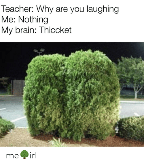 why are you laughing: Teacher: Why are you laughing  Me: Nothing  My brain: Thiccket me🌳irl