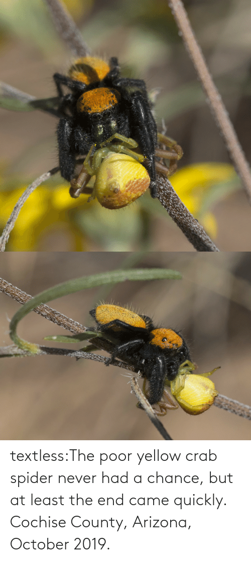 october: textless:The poor yellow crab spider never had a chance, but at least the end came quickly. Cochise County, Arizona, October 2019.