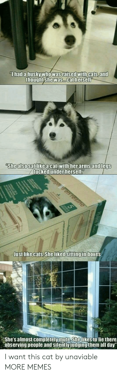 """Cats, Dank, and Memes: Thad a husky who was raised with cats, and  thought she was. .cat herself""""  """"She also satlikeacat,with herarmsand legs  tucked under herself""""  Elager is en resine  Just like cats, She liked sitting in boxes  She's almost completely mute. She likes to lie there  observing people and silently judging them all day"""" I want this cat by unaviable MORE MEMES"""