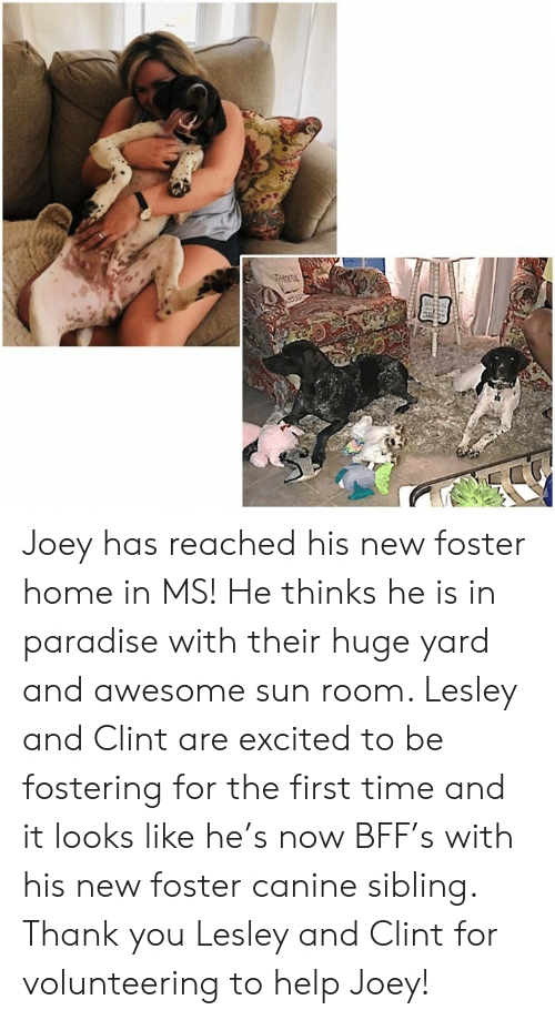 Memes, Paradise, and Thank You: THAKPL Joey has reached his new foster home in MS!  He thinks he is in paradise with their huge yard and awesome sun room.  Lesley and Clint are excited to be fostering for the first time and it looks like he's now BFF's with his new foster canine sibling.  Thank you Lesley and Clint for volunteering to help Joey!