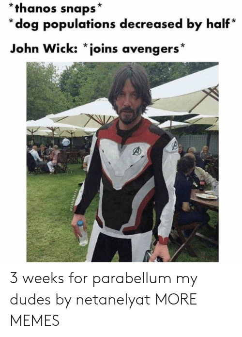 My Dudes: *thanos snaps*  *dog populations decreased by half*  John Wick: *joins avengers* 3 weeks for parabellum my dudes by netanelyat MORE MEMES