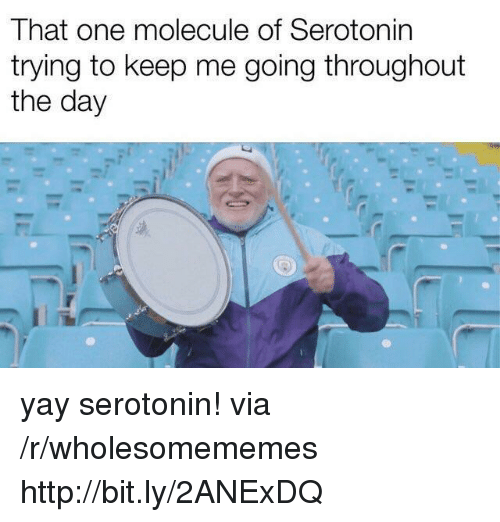 Http, Serotonin, and One: That one molecule of Serotonin  trying to keep me going throughout  the day yay serotonin! via /r/wholesomememes http://bit.ly/2ANExDQ